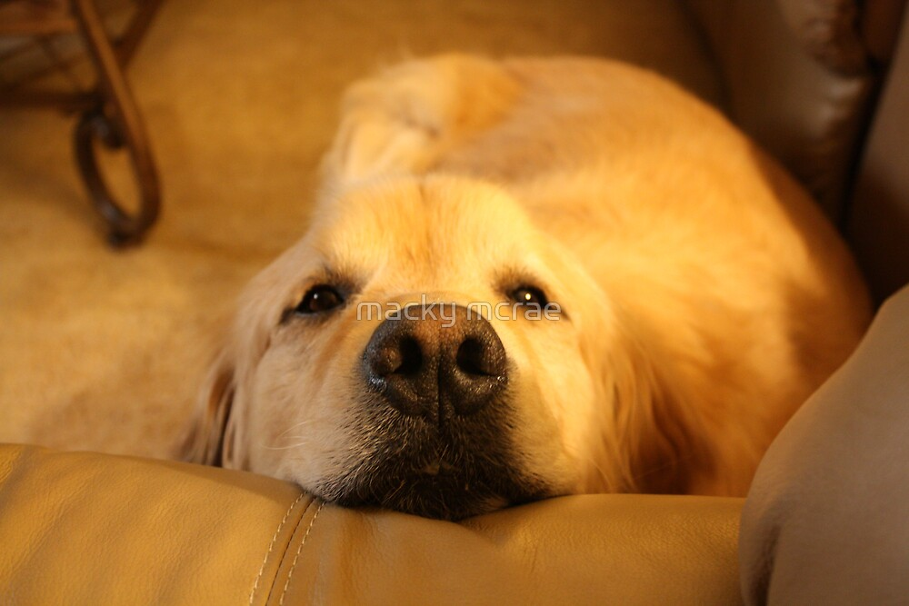 can i lie on the sofa, please? by macky mcrae