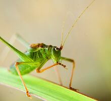 Green hoppy! by Squealia