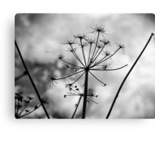 The strength behind the passing beauty Canvas Print