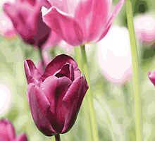 Purple Tulip by chris2766
