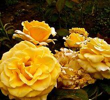 Yellow Moldovan Sunshine Roses by Megan Nicole