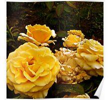 Yellow Moldovan Sunshine Roses Poster