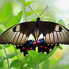 Butterfly Beauty by bygeorge