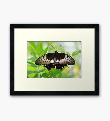 Butterfly Beauty Framed Print