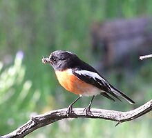 robins dinner by Rick Playle