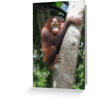 Borneo orangutang #2 Greeting Card