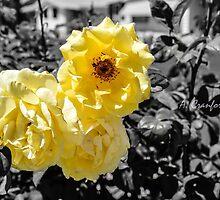 The yellow flowers by aubreysbik