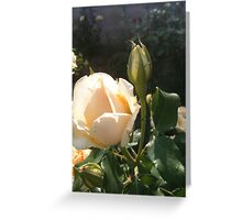 Cream Rose Pair Greeting Card