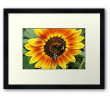Bees and Sunflower Framed Print