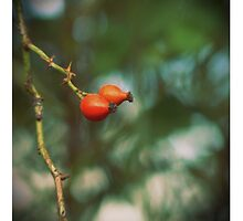 Rose hip... by polaroids