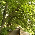 Rothenburg ob Tauber, Germany by SusanAdey