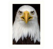 Sam the bald eagle. Art Print