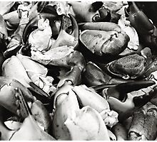 Crab Claws Photographic Print