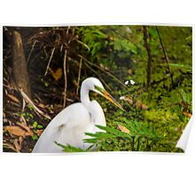 Great Blue Heron - White Poster