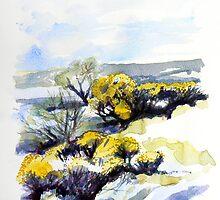 Yellow Gorse 3 by Richard Sunderland