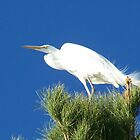 Egret in the wind by RichImage