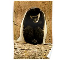 The Colobus Contemplation Poster