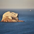 The Bass Rock by Andrew Ness - www.nessphotography.com