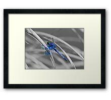 I AM BLUE! Framed Print