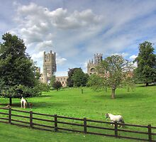 Ely Cathedral by CliveHarris