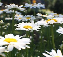 Pushing up Daisies by Donna R. Carter