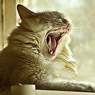 Hear Me Roar by ibjennyjenny