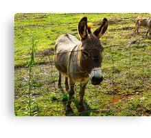 """""""'Donkey"""" Canvas Print"""