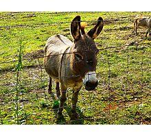 """'Donkey"" Photographic Print"