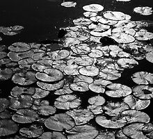 Lily Pads by Susan R. Wacker