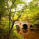 Bridge at Bowman's Hill wildflower preserve... by DaveHrusecky