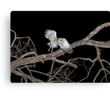 Barn Owl In Flight Canvas Print