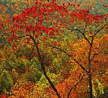 DOGWOOD TREE by Chuck Wickham