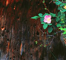 WILD ROSE by Chuck Wickham