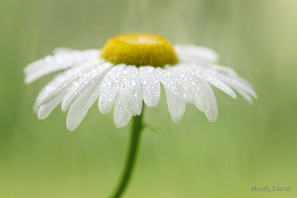 Dancing in the rain by Mandy Disher
