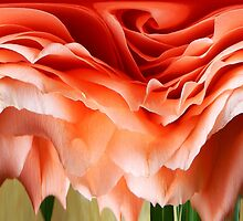 DISTORTED ROSE by Sandra  Aguirre