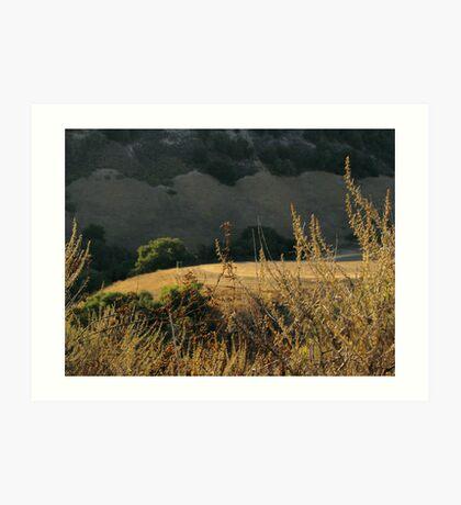 Monterey Hills 1 Art Print