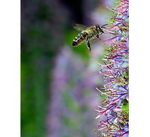 Collecting Nectar Photographic Print