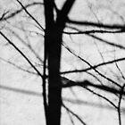 Tree Shadow by sedge808
