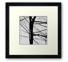 Tree Shadow Framed Print