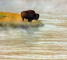 LONE BULL by Sandy Stewart