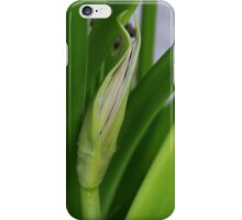 Daylily Scape Starting to Open iPhone Case/Skin