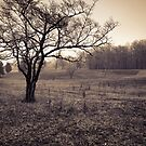 Spotsylvania Battlefield by Harry H Hicklin