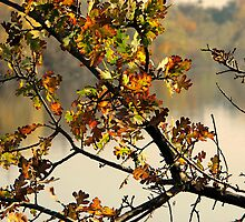 Autumn Reflections by Ellen Cotton