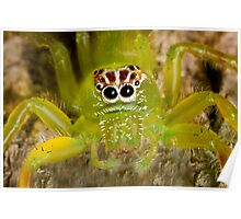 Bright green spider with unusual markings Poster
