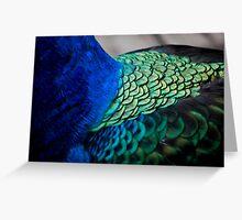 Peacock Feather Macro  Greeting Card