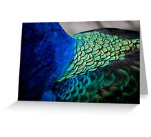 Peacock Feather Macro  Greeting Card