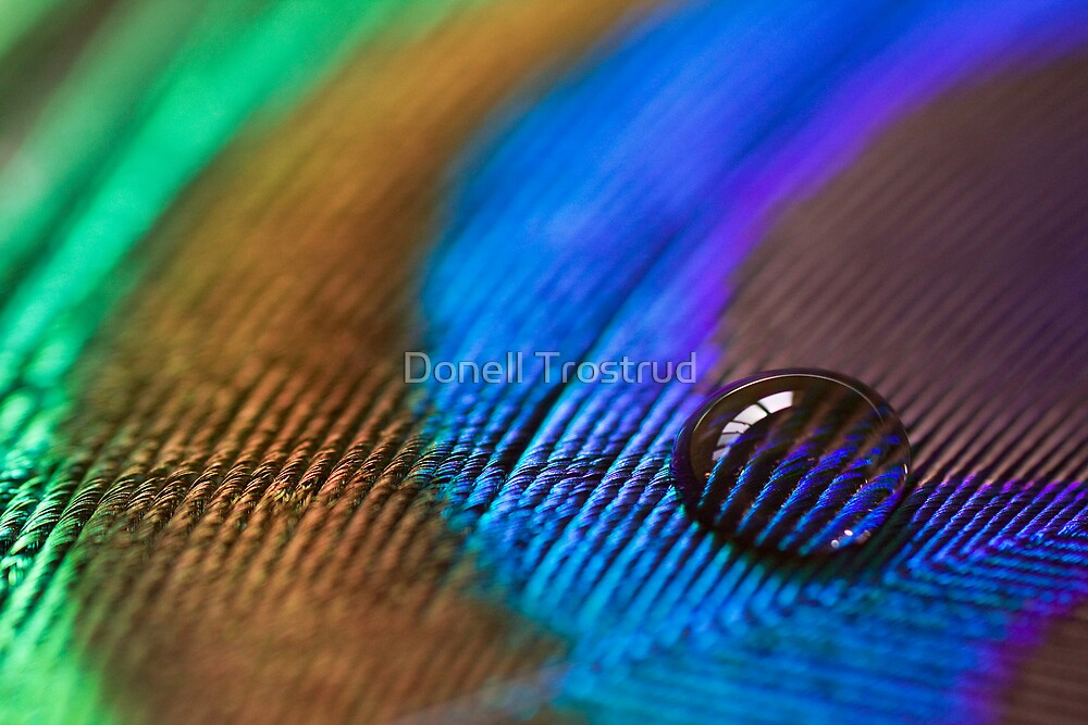 Iridescence by Donell Trostrud