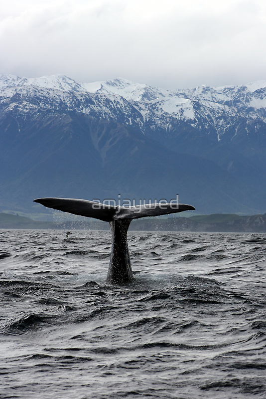 Sperm Whale by amjaywed