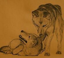 Dingo Whispers by Beth Haywood