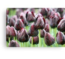 Tulip Rain Canvas Print